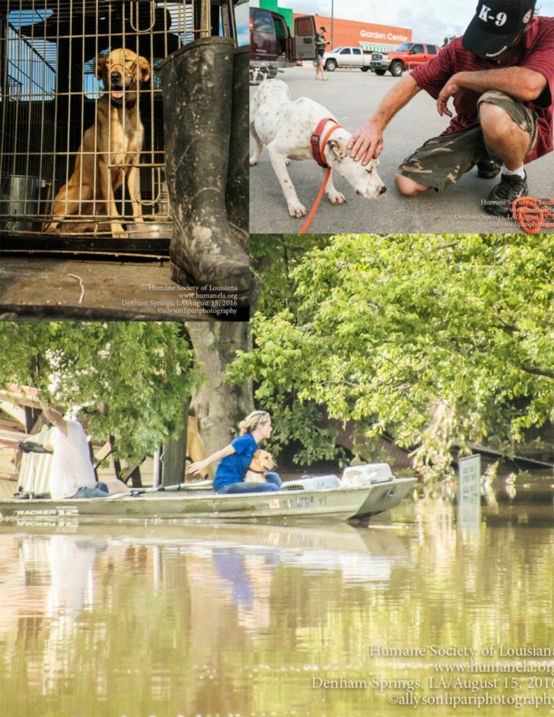 Flood-Release-pics-1
