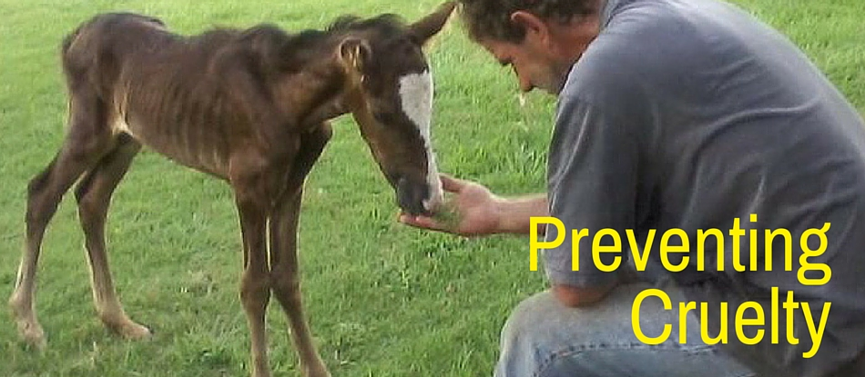 Preventing Cruelty Final