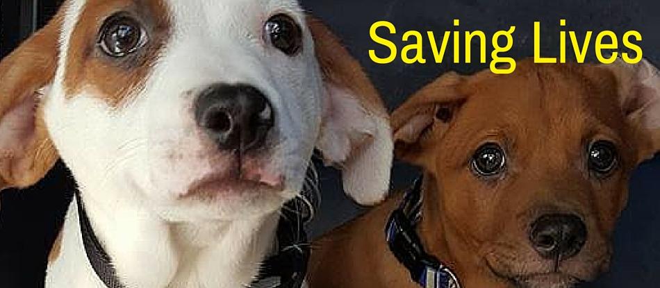 Saving Lives Final